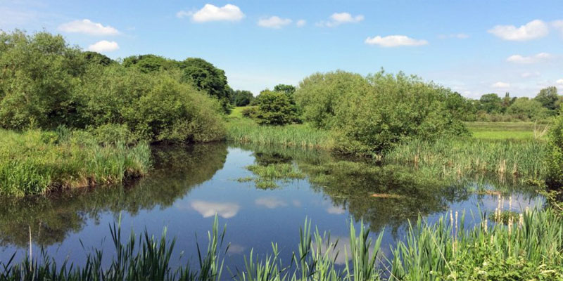 Tame Valley Wetlands